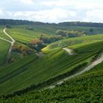 .... ich könnte den ganzen Tag wie blöd durch die Weinlandschaft laufen - einfach schön.
