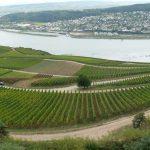 herrliche Wein-Landschaft