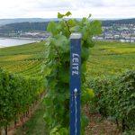 Weingut Leitz, Begrenzungspfähle für die jeweilige Rebfläche
