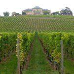 Schloss Johannisberg mit dem ersten Riesling-Weingut der Welt