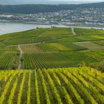 Weinberge ohne Ende, mit Blick auf die andere Rheinseite - Rheinhessen
